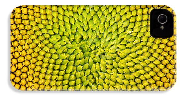 Sunflower Middle  IPhone 4 Case