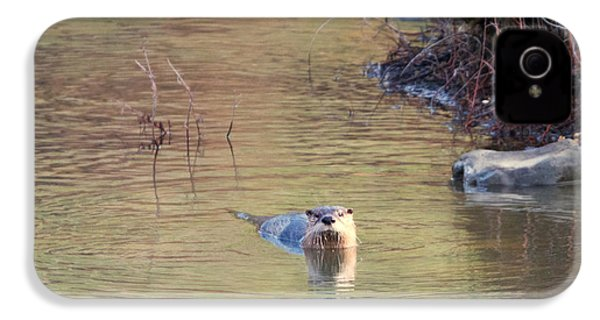 Sunrise Otter IPhone 4 Case by Mike Dawson