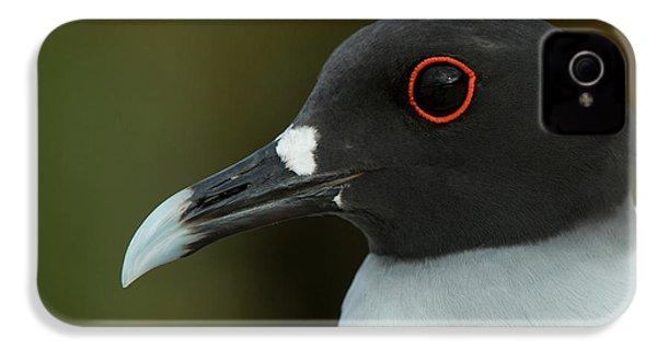 Swallow-tailed Gull (larus Furcatus IPhone 4 Case by Pete Oxford