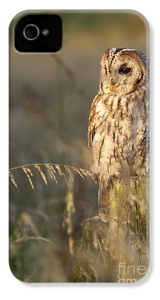 Tawny Owl IPhone 4 Case by Tim Gainey