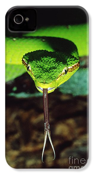 Temple Viper IPhone 4 Case by Gregory G. Dimijian