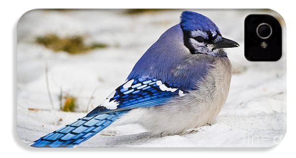 The Bluejay IPhone 4 Case by Ricky L Jones