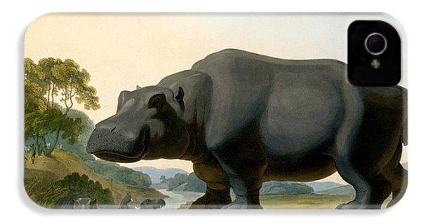 The Hippopotamus, 1804 IPhone 4 Case by Samuel Daniell