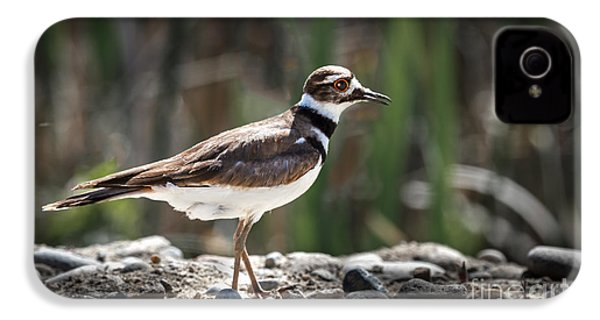The Killdeer IPhone 4 / 4s Case by Robert Bales