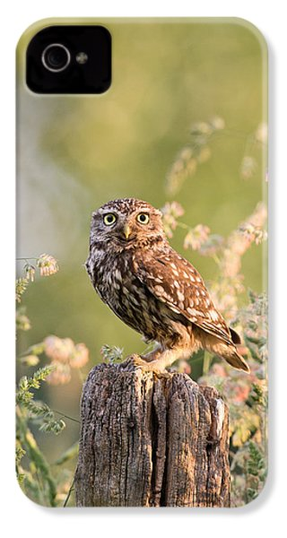 The Little Owl IPhone 4 Case by Roeselien Raimond