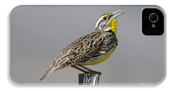 The Meadowlark Sings  IPhone 4 Case by Jeff Swan