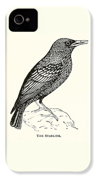 The Starling IPhone 4 Case by English School