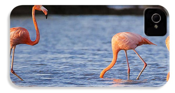 The Three Flamingos IPhone 4 Case by Adam Romanowicz