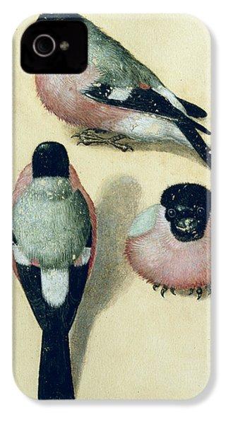 Three Studies Of A Bullfinch IPhone 4 / 4s Case by Albrecht Durer