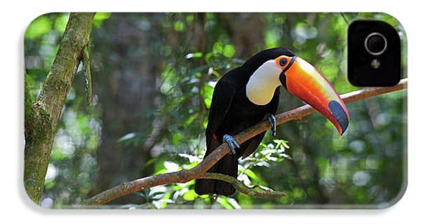 Toco Toucan (ramphastos Toco IPhone 4 Case