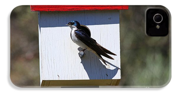 Tree Swallow Home IPhone 4 Case by Mike  Dawson