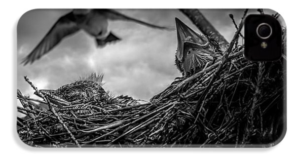 Tree Swallows In Nest IPhone 4 Case by Bob Orsillo