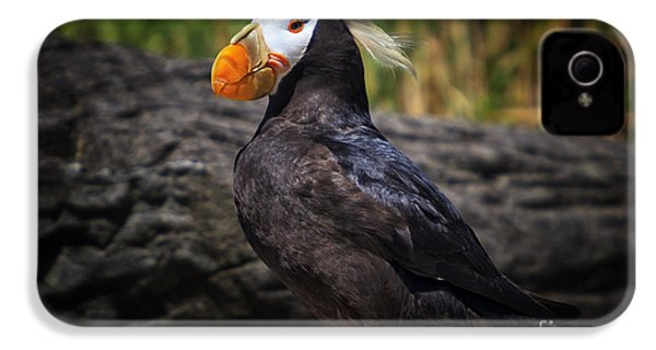 Tufted Puffin IPhone 4 / 4s Case by Mark Kiver