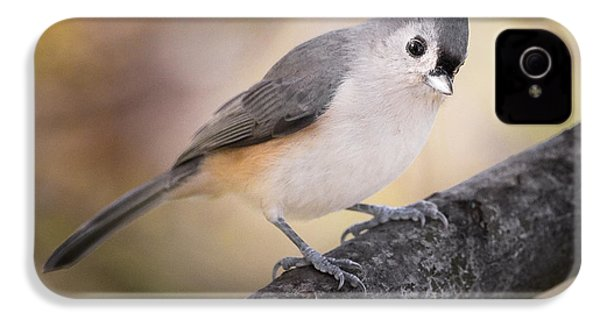 Tufted Titmouse IPhone 4 Case by Bill Wakeley