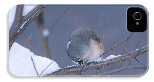 Tufted Titmouse Eating Seeds IPhone 4 Case by Paul J. Fusco