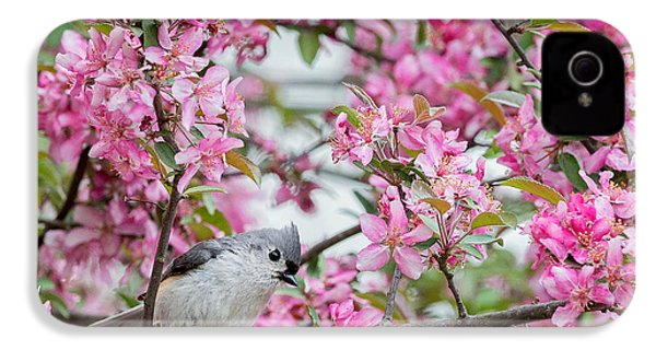 Tufted Titmouse In A Pear Tree Square IPhone 4 Case by Bill Wakeley
