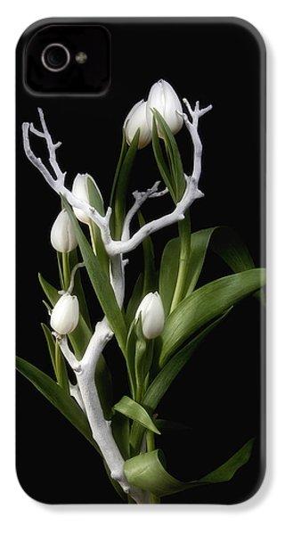 Tulips In Tree Branch Still Life IPhone 4 / 4s Case by Tom Mc Nemar