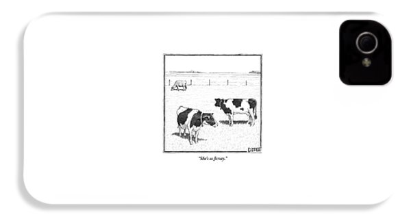 Two Averagely Spotted Cows Looking At A Plain Cow IPhone 4 Case