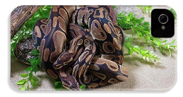 Two Burmese Pythons Python Bivittatus IPhone 4 Case