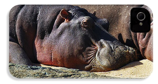 Two Hippos Sleeping On Riverbank IPhone 4 Case by Johan Swanepoel