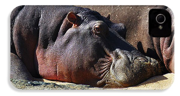 Two Hippos Sleeping On Riverbank IPhone 4 / 4s Case by Johan Swanepoel