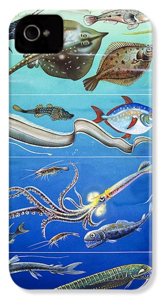 Underwater Creatures Montage IPhone 4 / 4s Case by English School