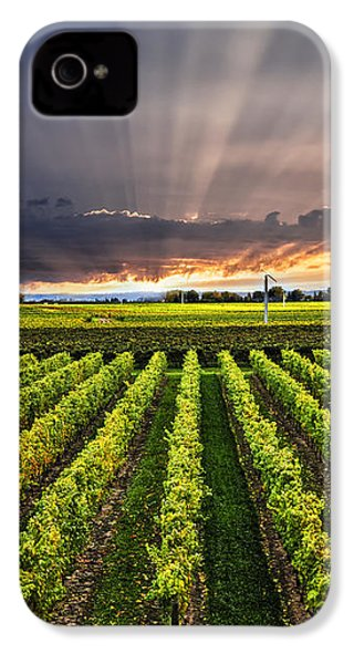 Vineyard At Sunset IPhone 4 Case by Elena Elisseeva