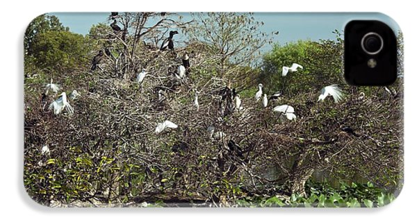 Wading Birds Roosting In A Tree IPhone 4 Case by Bob Gibbons