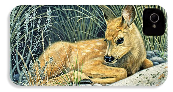 Waiting For Mom-mule Deer Fawn IPhone 4 Case by Paul Krapf