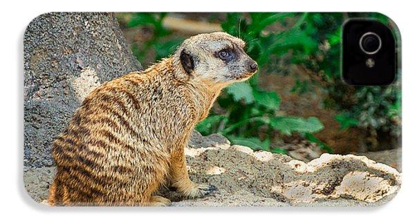Watchful Meerkat IPhone 4 Case by Jon Woodhams