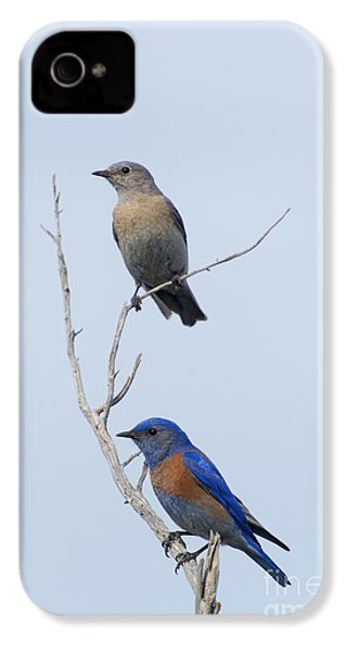 Western Bluebird Pair IPhone 4 / 4s Case by Mike  Dawson