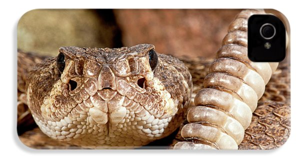 Western Diamondback Rattlesnake IPhone 4 / 4s Case by David Northcott