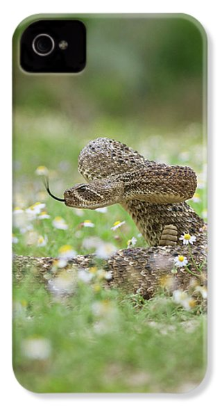 Western Diamondback Rattlesnake IPhone 4 Case by Larry Ditto