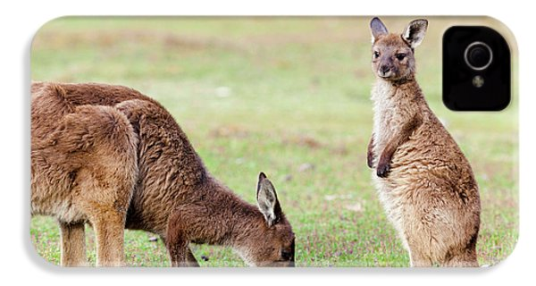 Western Grey Kangaroo (macropus IPhone 4 / 4s Case by Martin Zwick