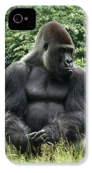 Western Lowland Gorilla Male IPhone 4 Case by Konrad Wothe