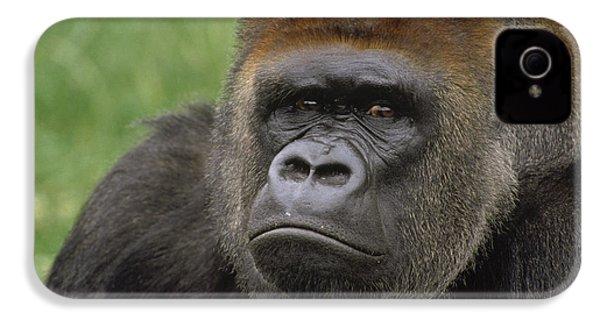 Western Lowland Gorilla Silverback IPhone 4 Case by Gerry Ellis