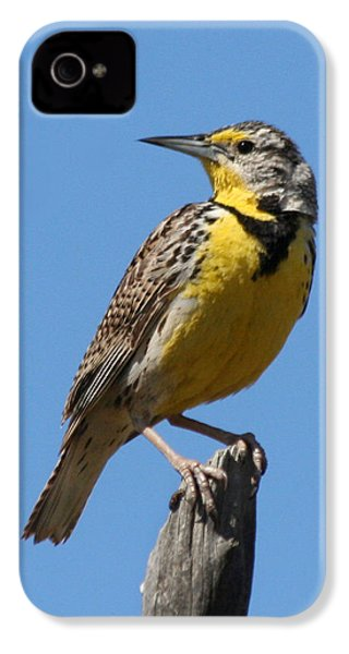 Western Meadowlark Perching IPhone 4 Case by Bob and Jan Shriner