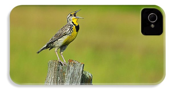 Western Meadowlark IPhone 4 Case by Tony Beck