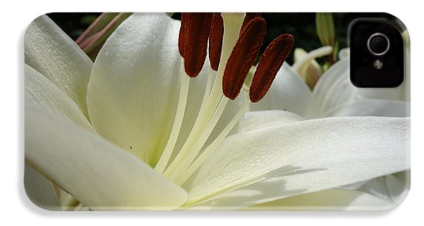 White Asiatic Lily IPhone 4 Case by Jacqueline Athmann