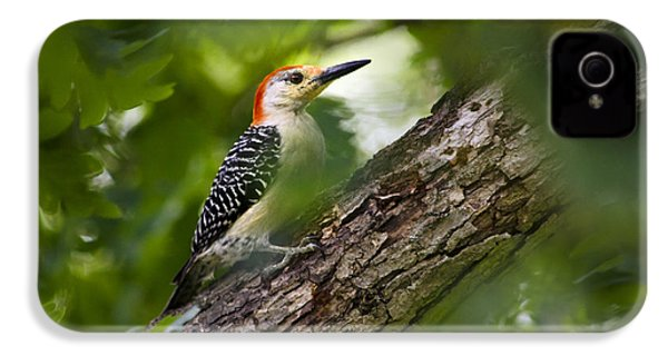 Red Bellied Woodpecker IPhone 4 Case by Christina Rollo