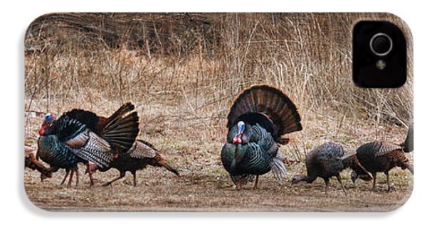 Wild Turkeys IPhone 4 / 4s Case by Lori Deiter