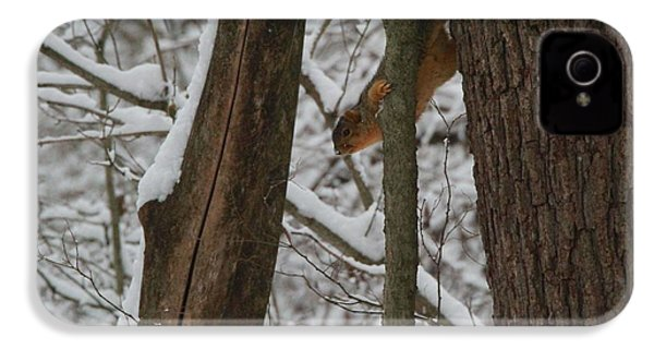 Winter Squirrel IPhone 4 / 4s Case by Dan Sproul