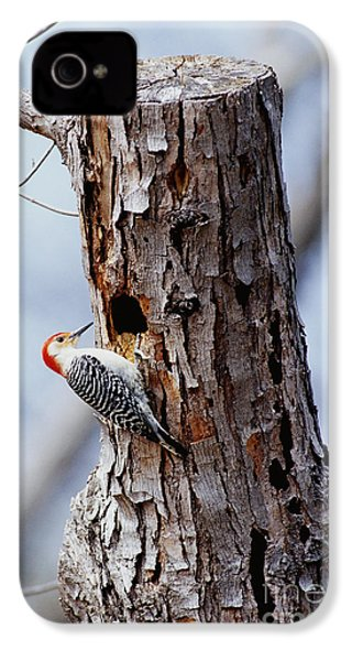 Woodpecker And Starling Fight For Nest IPhone 4 / 4s Case by Gregory G. Dimijian