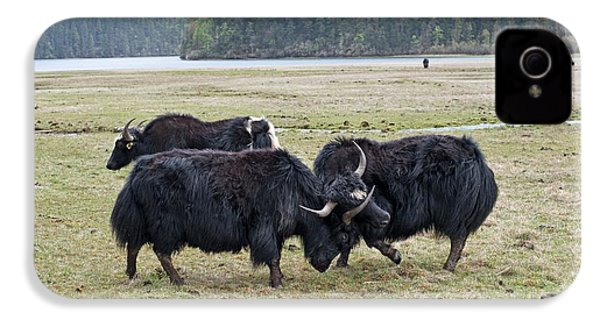 Yaks Fighting In Potatso National Park IPhone 4 Case by Tony Camacho