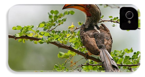 Yellow-billed Hornbill IPhone 4 Case by Bruce J Robinson