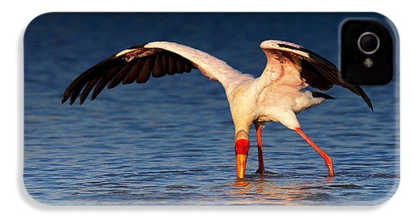 Yellow-billed Stork Hunting For Food IPhone 4 / 4s Case by Johan Swanepoel
