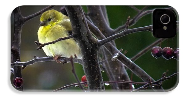 Yellow Finch IPhone 4 Case