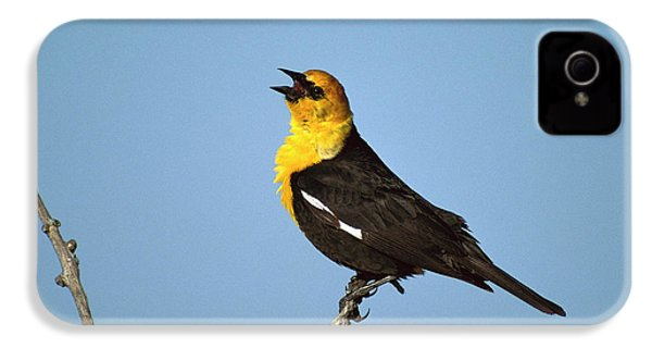 Yellow-headed Blackbird Singing IPhone 4 / 4s Case by Tom Vezo
