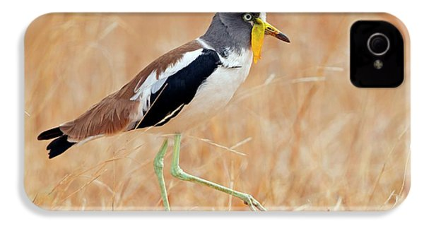 Yellow-wattled Lapwing IPhone 4 Case by Bildagentur-online/mcphoto-schaef