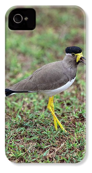 Yellow-wattled Lapwing IPhone 4 Case by Peter J. Raymond